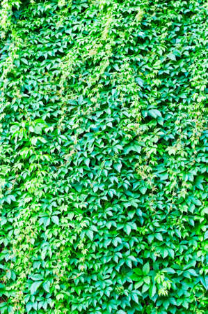 green background Stock Photo - 7308560