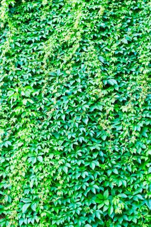 green background photo
