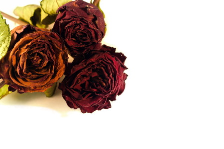 Dry roses and Flowers in White Background photo
