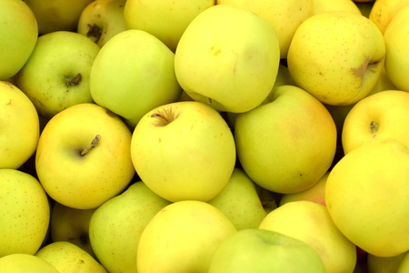 yellow  green: Fresh Apple fruit ready for sale
