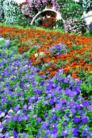 miracle: Flowers Matt at the Dubai Miracle garden