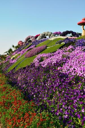 miracle: Flowers Matt at the Dubai Miracle garden,Dubai, UAE Stock Photo