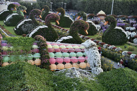 Dubai, United Arab Emirates, March 22, 2018, Dubai Miracle Garden located in the district of Dubailand is one of a kind in the region and the world for such a unique display and extravagant outdoor recreational destination visited by lot of people in wint
