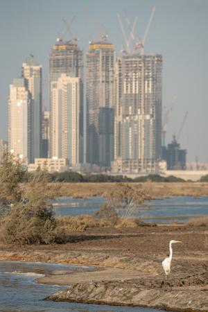 Wild Birds in Ras Al Khor Wildlife Sanctuary, Ramsar Site, Mangrove hide 1, Dubai, United Arab Emirates
