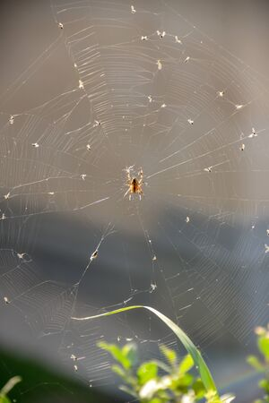 Close-up Spider with web at park in the day Imagens