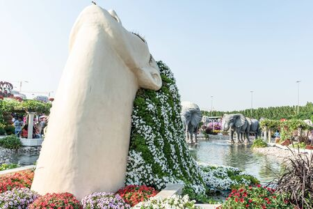 Dubai, United Arab Emirates, December 01, 2019, Dubai Miracle Garden located in the district of Dubailand is one of a kind in the region and the world for such a unique display and extravagant outdoor recreational destination visited by lot of people in winter time.