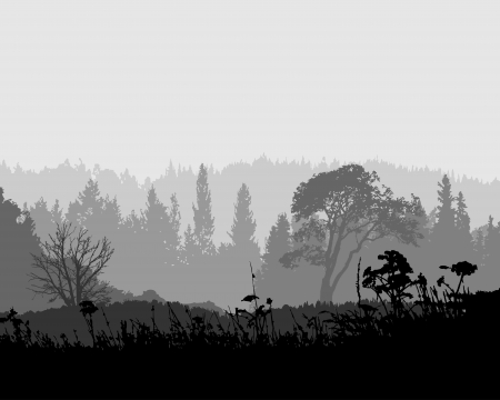 the mysterious misty forest is calling you to show the secret Stock Vector - 17223691