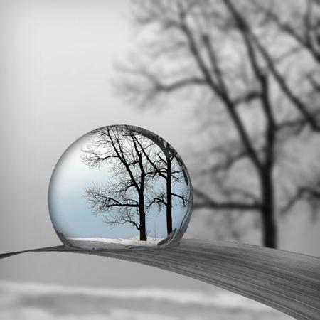 creative: Winter trees through a water drop Stock Photo
