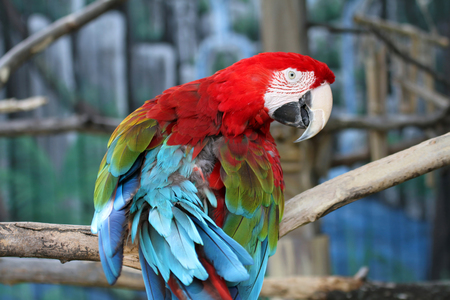 Photo of a beautifully colored parrot sitting on a tree branch