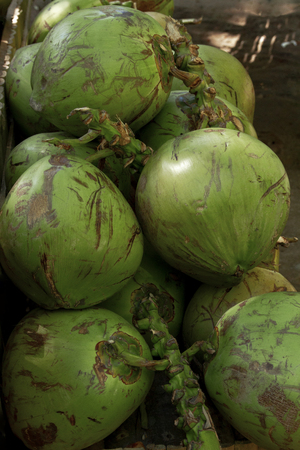 Stacked of young coconuts