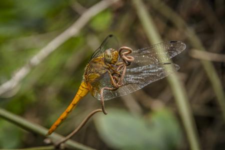 A Dragonfly close-up picture Archivio Fotografico