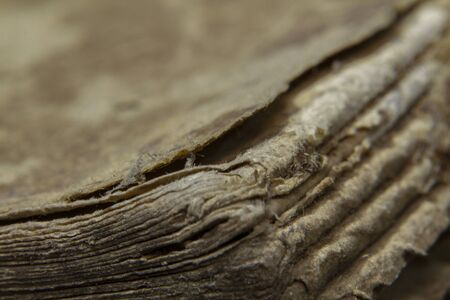 Macro shot old vintage book papers edge shape and texture Standard-Bild - 129486913
