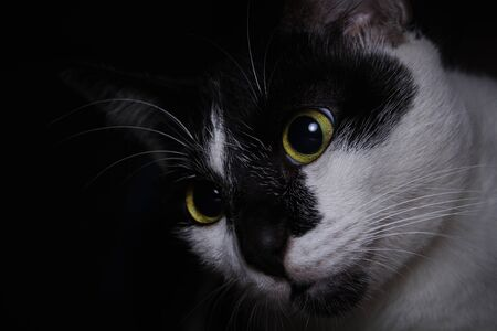 Close-up cute face black and white cat looking up to her toys Imagens