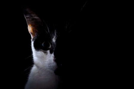 Close-up half face black and white cat in the darkroom 写真素材