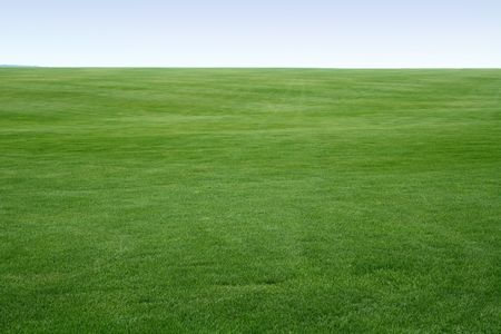 big field covered of young green grass like carpet till skyline  Stock Photo