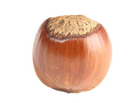 ripe glossy hazelnut isolated over white background