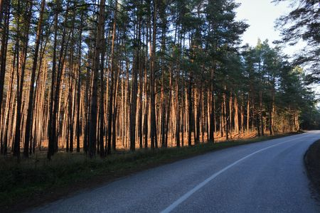 road through sunny pine forest  Road is in blue shadow  Pines are lit by the setting sun Stock Photo - 13236125