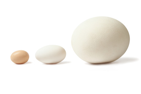 Three eggs of different size - chicken anserous and ostrich stands lined over white  Stock Photo