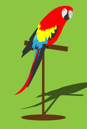 exotic pet:      Parrot illustration. Vector. Without mesh. Illustration