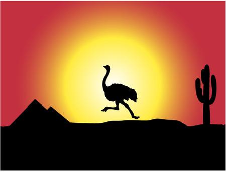 Wild ostrich is runing across the desert