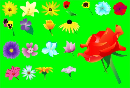 Set from twenty various flowers. Vector. Without mesh. Vector