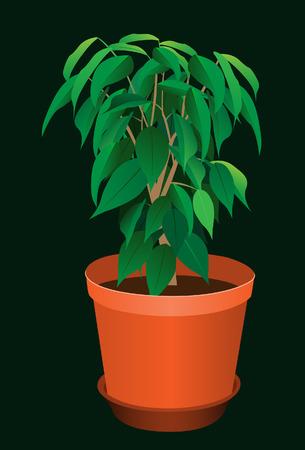 haus garten: In einem Topf auspflanzen. Vektor. Ohne Netz. Illustration