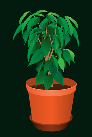 Plant in a pot. Vector. Without mesh. Stock Vector - 4767884