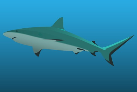 domination: The big white shark. Vector. Without mesh.