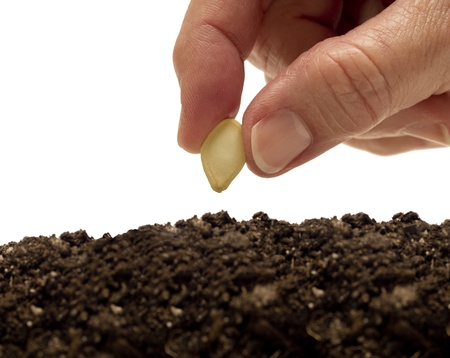Planting A Seed XXXL