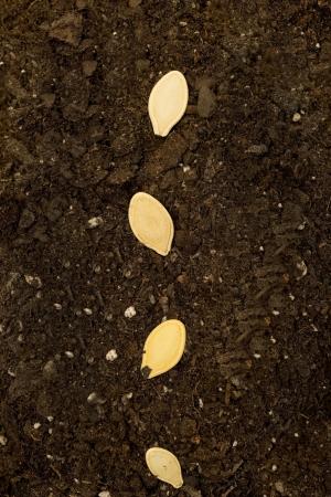 Seeds In Soil Vertical XXXL