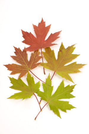 changing color: Leaves Changing Color