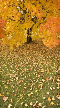tree vertical: Rainy Day in Autumn Stock Photo