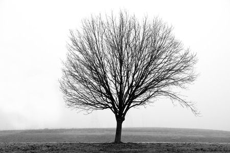 bare tree: Bare Tree In Black And White