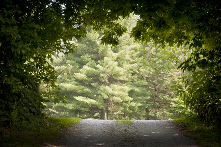healthy path: Nature Path To Light