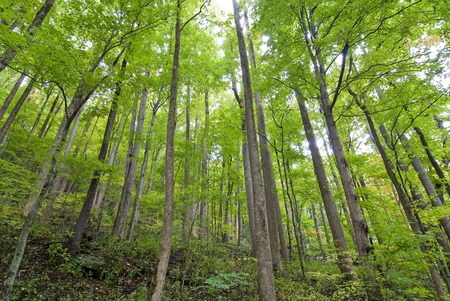tall tree: Horizontal Of Tall Tree Reaching The Skies