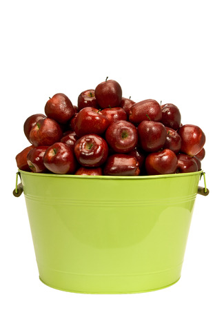 glistening: Glistening Dew Covered Red Delicious Apples Piled High In Large Bucket Isolated on White Background