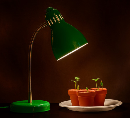 business symbols metaphors: Three Sprouts With Grow Lamp Stock Photo