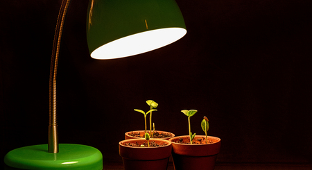 business symbols metaphors: Three Young Sprouts With Grow Lamp Stock Photo