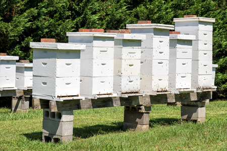 Rows Of Beehives With Bees Stock Photo