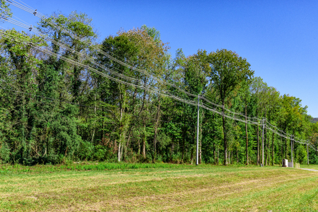 Horizontal shot of some high capacity power lines beside some green trees.