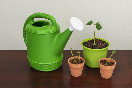 Horizontal shot of a green watering can with a white spout next to three pots with young plants in them.  Wooden surface next to a white textured background.