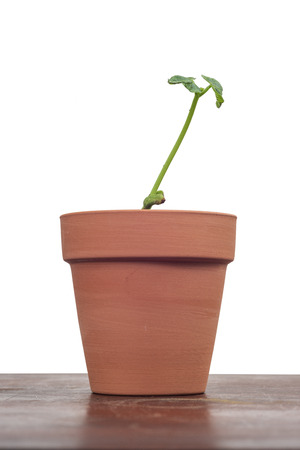 Vertical shot of a young plant in a clay pot on a wooden surface with a textured white background.  Copy space.