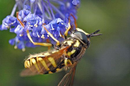 inverted: Inverted Wasp