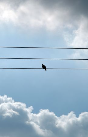 singular: Lonely bird watch clouds go by