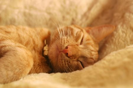 cozy sleeping kitten with focus only on the nose Stock Photo - 2449032
