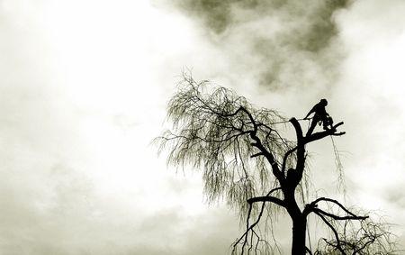 sauce: grunge cortador de árboles silueta  Foto de archivo