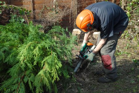 surgeons hat: tree worker cutting conifers with a chainsaw Stock Photo