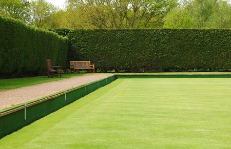 hedge plant: bowling green lawn perspective