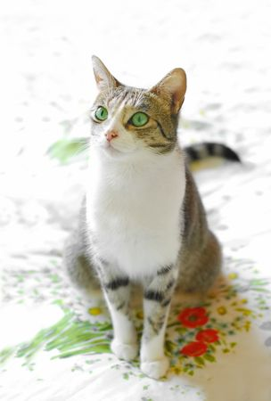 adoration: beautiful green eyed tabby cat on floral print fabric