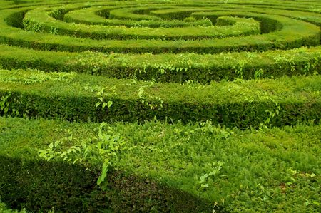 bewildering: swirls to the center of a complicated hedge maze